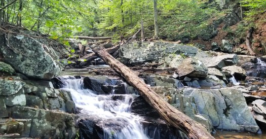 Tributary of the Gunpowder Falls